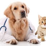 Is Pet Insurance Really That Good?